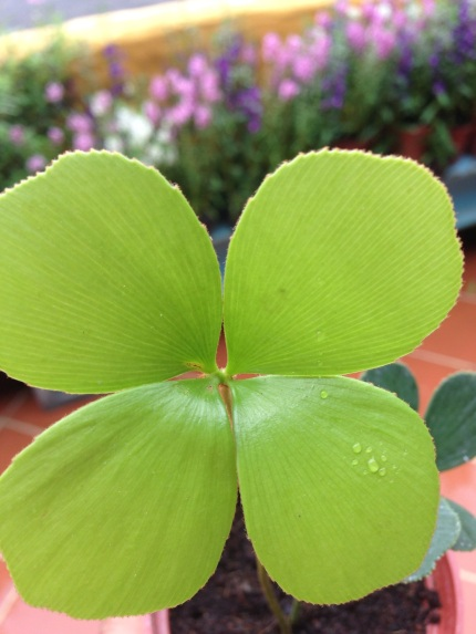莉莉的綠色小盆栽